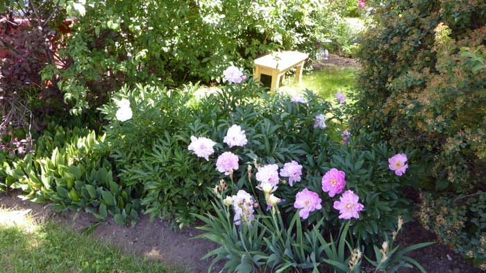 Missing garden bench
